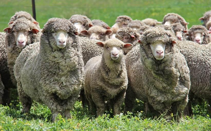Αναβολή μαθήματος νέων κτηνοτρόφων με θέμα Branding