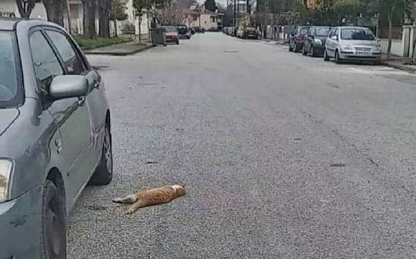 Δεκάδες γάτεςβρέθηκαν νεκρές από φόλες στα Τρίκαλα