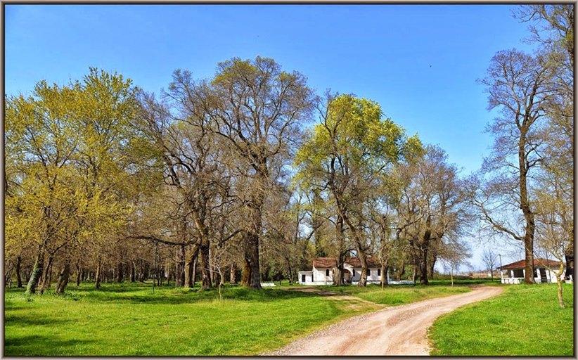 Δ. Τρικκαίων: Διατηρητέο μνημείο της φύσης το δάσος Παναγίας στο Βαλτινό