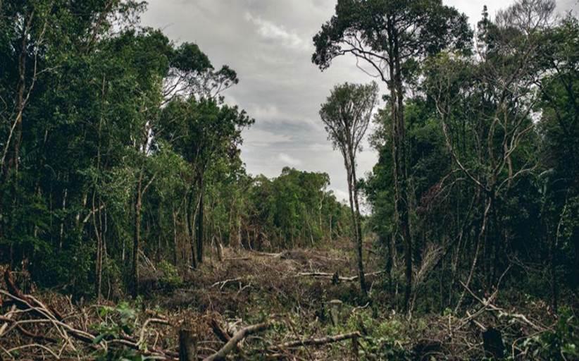 Η καταστροφή της φύσης θα φέρει νέες πανδημίες λένε οι επιστήμονες