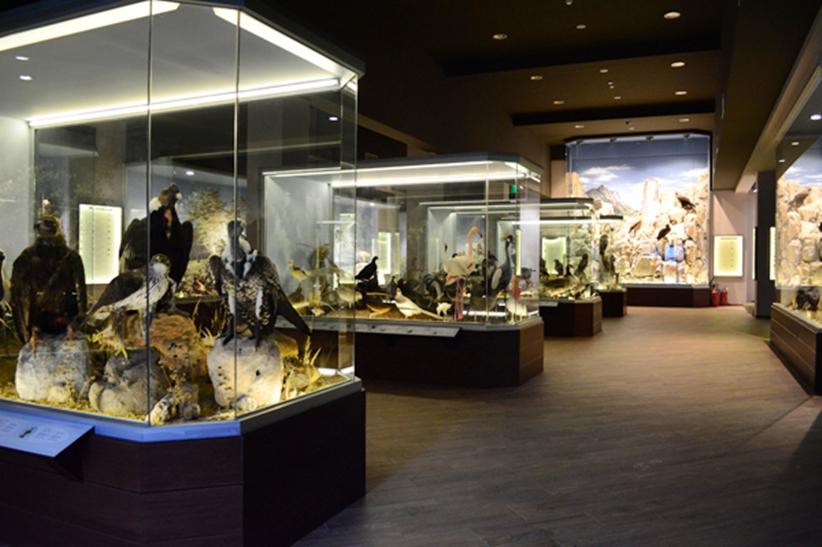 Δυο βραβεία για το μουσείο Φυσικής Ιστορίας  Μετέωρων και Μουσείο μανιταριών