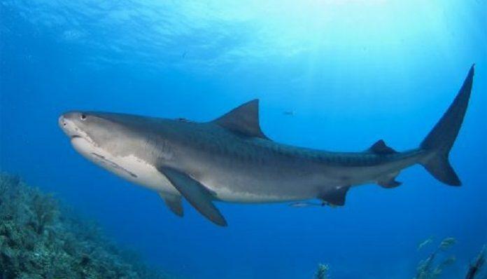 Φριχτός θάνατος σέρφερ στην Αυστραλία... του επιτέθηκε καρχαρίας