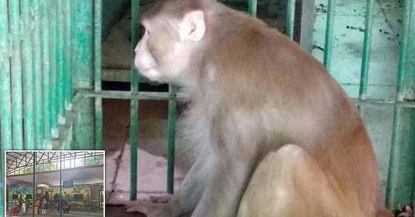 Ινδία: Αλκοολική μαϊμού σκότωσε άνθρωπο και τραυμάτισε άλλους 250