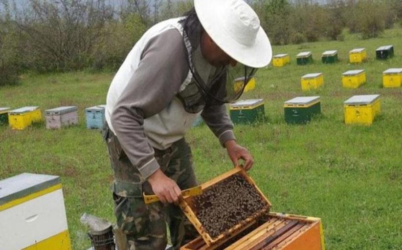 Ανάρτηση καταστάσεων δικαιούχων Μελισσοκομίας