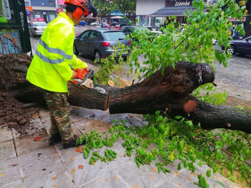 Δ. Τρικκαίων: Απομακρύνθηκε δέντρο - Χωρίς ριζικό σύστημα πιθανώς λόγω ασθένειας