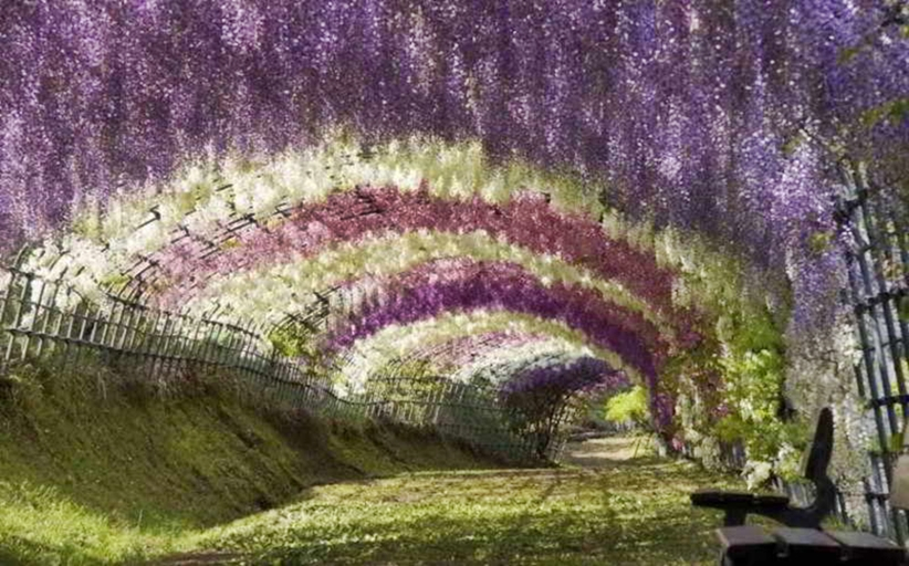 """""""Ο κήπος με τις αυταπάτες"""""""