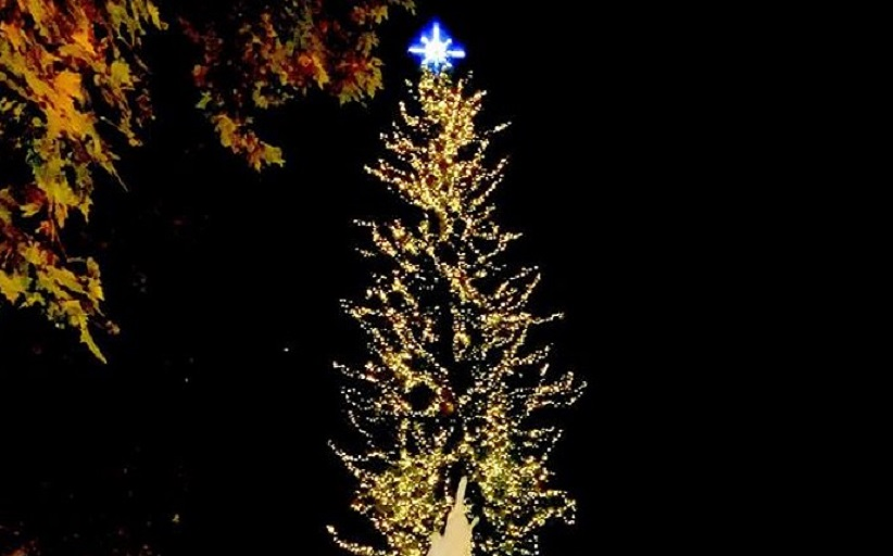 Δ. Τρικκαίων: Διαδικτυακά φέτος φωταγωγείται το υψηλότερο φυσικό χριστουγεννιάτικο δέντρο