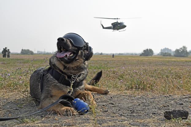 Νέοι σκύλοι στις ένοπλες δυνάμεις