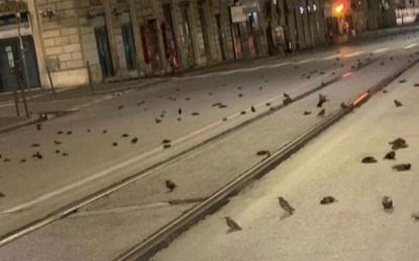 Ρώμη: «Σφαγή» πτηνών από τα πυροτεχνήματα