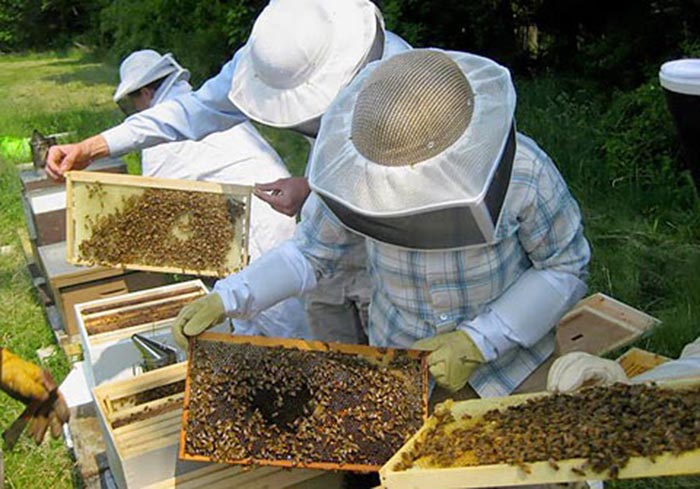 Υποβολή αιτήσεων από μελισσοκόμους