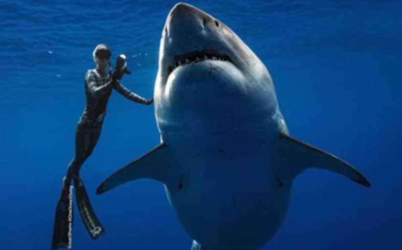 Ο αριθμός των καρχαριών και των σαλαχιών έχει μειωθεί κατά 71% από το 1970