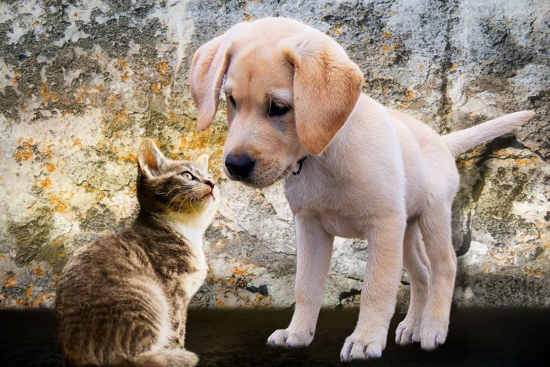 Κορονοϊός - Κατοικίδια: Η Νότια Κορέα ξεκινά τεστ Covid-19 σκύλους και γάτες