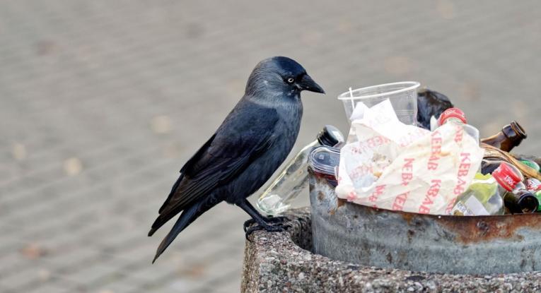 ΟΗΕ: Ένα δισ. τόνοι τροφίμων σπαταλούνται ετησίως