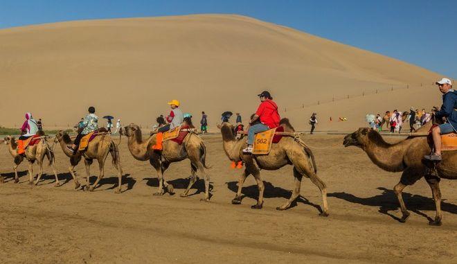 Στην Κίνα έφτιαξαν τα πρώτα φανάρια για καμήλες παγκοσμίως