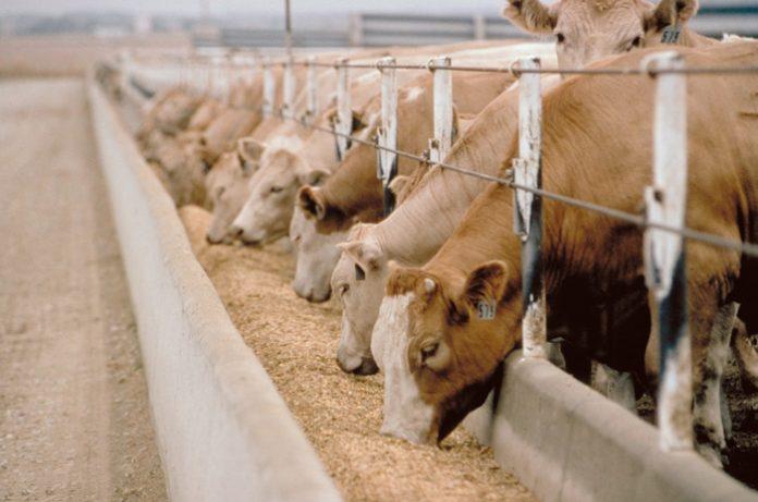 Δήλωση παραγωγής και διακίνησης ζωοτροφών έτους 2020