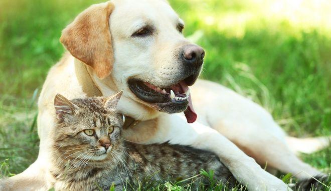 Ψηφίστηκε το νομοσχέδιο για τα ζώα συντροφιάς