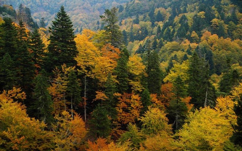 Παπαστεργίου: Σωστός σχεδιασμός για να ελπίζουμε στη συνέχεια των δασών μας