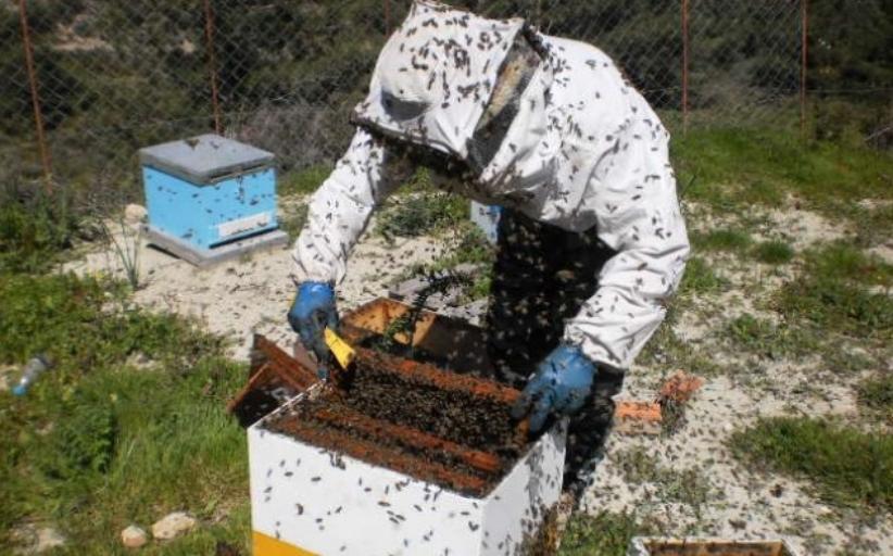 Ενημέρωση μελισσοκόμων για υποβολή αίτησης δήλωσης κατεχόμενων κυψελών